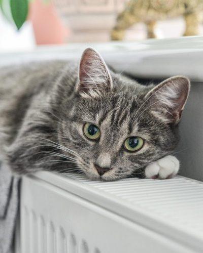 Chat gris couché sur un radiateur